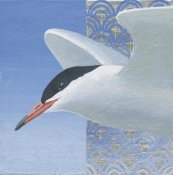 Kathrine Lovell - Common Tern II