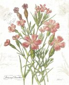 Katie Pertiet - January Dianthus on White