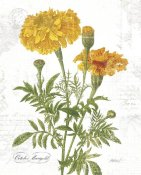 Katie Pertiet - October Marigold on White