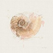 Katie Pertiet - Shell Collector II