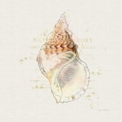 Katie Pertiet - Shell Collector III