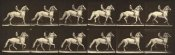 Eadweard J. Muybridge - Motion Study: Man Riding A Horse