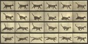 Eadweard J. Muybridge - Motion Study: Running Cat