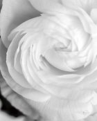 Brookview Studio - Black and White Petals I