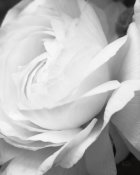 Brookview Studio - Black and White Petals II