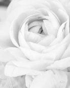 Brookview Studio - Black and White Petals III
