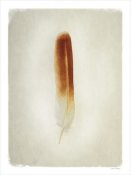 Debra Van Swearingen - Feather II