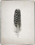 Debra Van Swearingen - Feather I - BW