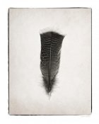 Debra Van Swearingen - Feather III - BW