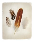Debra Van Swearingen - Feather Group I