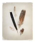 Debra Van Swearingen - Feather Group II