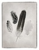 Debra Van Swearingen - Feather Group I - BW