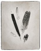 Debra Van Swearingen - Feather Group II - BW