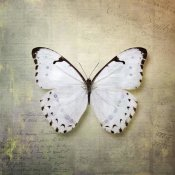 Debra Van Swearingen - French Butterfly II