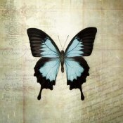 Debra Van Swearingen - French Butterfly III
