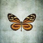 Debra Van Swearingen - French Butterfly VIII