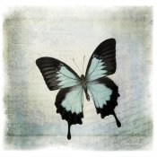 Debra Van Swearingen - Floating Butterfly III