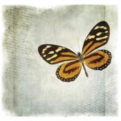 Debra Van Swearingen - Floating Butterfly VI