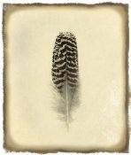 Debra Van Swearingen - Feather I Vintage