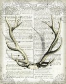 Sue Schlabach - Regal Antlers on Newsprint I