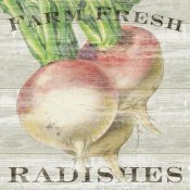 Sue Schlabach - Farm Fresh Radishes