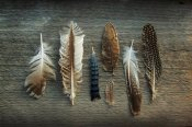 Sue Schlabach - Feather Collection I