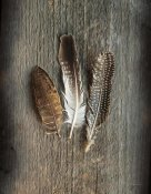 Sue Schlabach - Feather Collection II