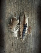 Sue Schlabach - Feather Collection III