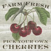 Sue Schlabach - Farm Fresh Cherries Square