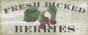 Sue Schlabach - Farm Fresh Raspberries