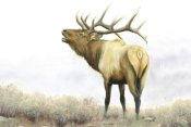 James Wiens - Majestic Elk