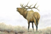 James Wiens - Majestic Elk Brown