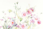 Danhui Nai - Queen Annes Lace and Cosmos on White