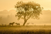 Richard Guijt - Golden Horses