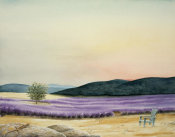 Emmeline Craig - Lavender Field of Dreams