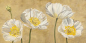 Luca Villa - Poppies on Gold