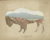 Wild Apple Portfolio - American Southwest Buffalo Distressed