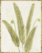 Albena Hristova - Forest Ferns II v2 Antique