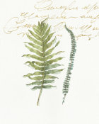 Lisa Audit - My Greenhouse Fern I