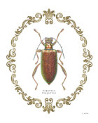 James Wiens - Adorning Coleoptera VI