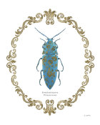 James Wiens - Adorning Coleoptera VIII