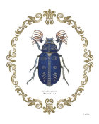 James Wiens - Adorning Coleoptera III