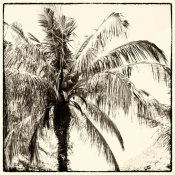 Debra Van Swearingen - Palm Tree Sepia III