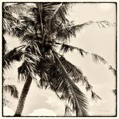 Debra Van Swearingen - Palm Tree Sepia II