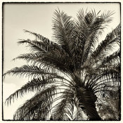 Debra Van Swearingen - Palm Tree Sepia I
