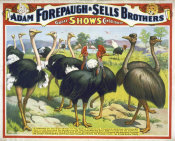 Hollywood Photo Archive - Adam Forepaugh & Sells Brothers Giant Birds