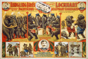 Hollywood Photo Archive - Ringling Bro's Marvelous Acting Pachyderms - Lockhart Elephant Comedians - 1899