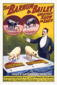 Hollywood Photo Archive - The Barnum & Bailey Greatest Show On Earth--Troupe Of Very Remarkable Trained Pigs