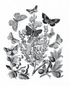 Wild Apple Portfolio - Butterfly Bouquet II Linen BW II