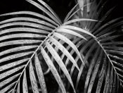 Debra Van Swearingen - Palm Fronds